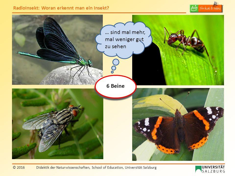 RadioInsekt: Woran erkennt man ein Insekt? © 2016Didaktik der Naturwissenschaften, School of Education, Universität Salzburg 6 Beine … sind mal mehr,