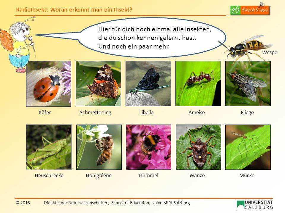 RadioInsekt: Woran erkennt man ein Insekt? © 2016Didaktik der Naturwissenschaften, School of Education, Universität Salzburg Libelle Wanze Schmetterli