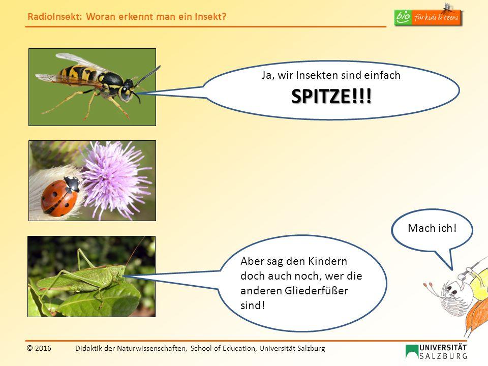 RadioInsekt: Woran erkennt man ein Insekt? © 2016Didaktik der Naturwissenschaften, School of Education, Universität Salzburg Ja, wir Insekten sind ein