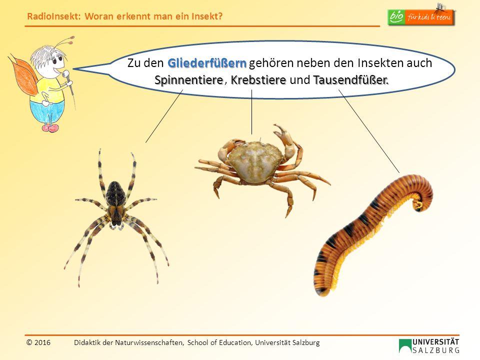RadioInsekt: Woran erkennt man ein Insekt? © 2016Didaktik der Naturwissenschaften, School of Education, Universität Salzburg Gliederfüßern Zu den Glie
