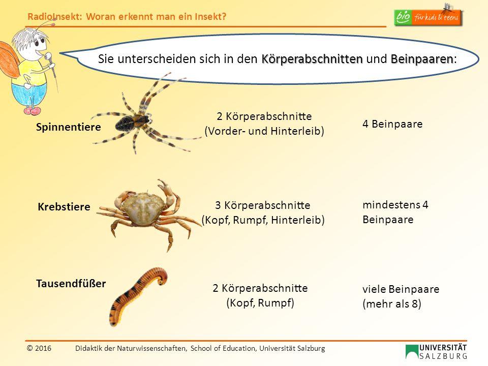 RadioInsekt: Woran erkennt man ein Insekt? © 2016Didaktik der Naturwissenschaften, School of Education, Universität Salzburg KörperabschnittenBeinpaar