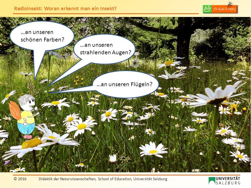 """RadioInsekt: Woran erkennt man ein Insekt? © 2016Didaktik der Naturwissenschaften, School of Education, Universität Salzburg """"RadioInsekt"""" …an unseren"""