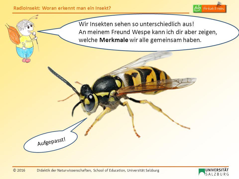 RadioInsekt: Woran erkennt man ein Insekt? © 2016Didaktik der Naturwissenschaften, School of Education, Universität Salzburg Wir Insekten sehen so unt