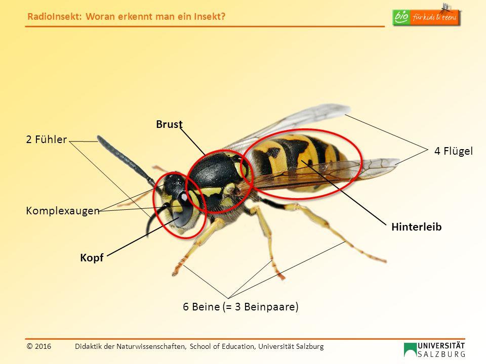RadioInsekt: Woran erkennt man ein Insekt? © 2016Didaktik der Naturwissenschaften, School of Education, Universität Salzburg 4 Flügel Kopf Brust 6 Bei