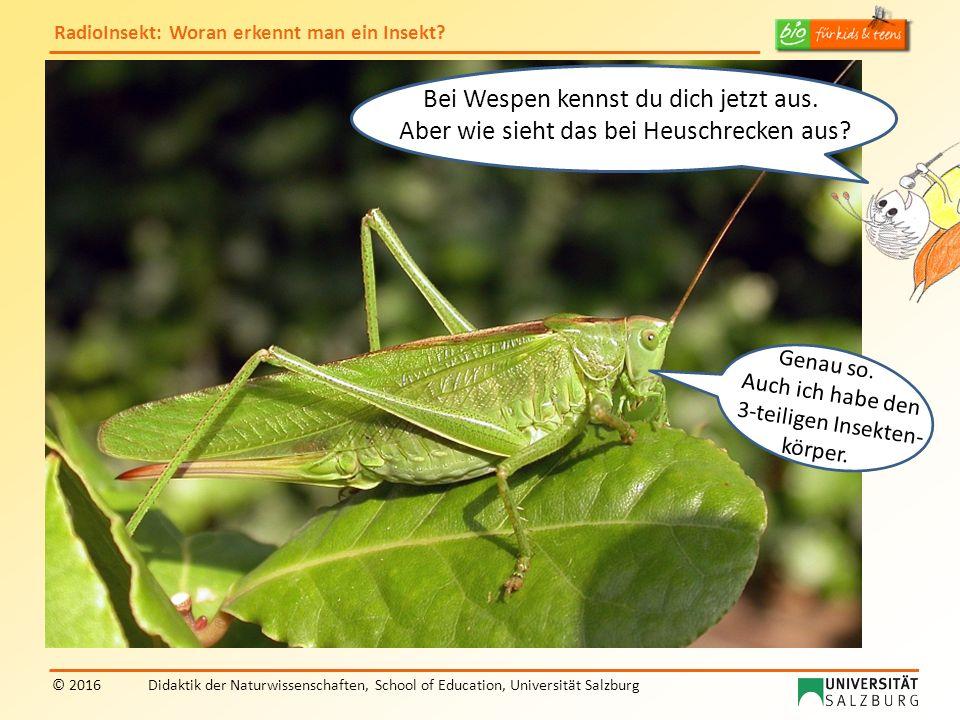 RadioInsekt: Woran erkennt man ein Insekt? © 2016Didaktik der Naturwissenschaften, School of Education, Universität Salzburg Bei Wespen kennst du dich