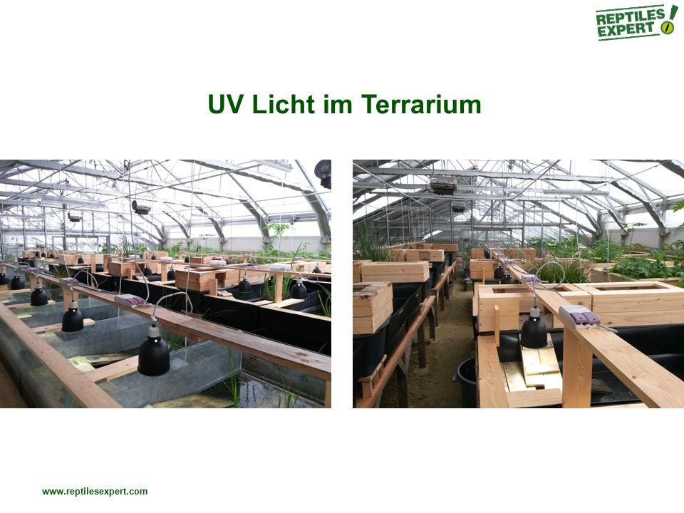 www.reptilesexpert.com Relevanter UVB-Bereich für die Vit D3 Synthese