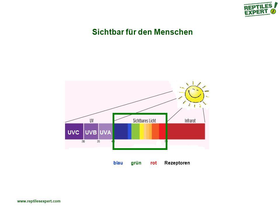 www.reptilesexpert.com Kompakt- / Energiesparlampe oder Leuchtstoffröhre - Effiziente Lichtausbeute - Mittlere UV-Leistung - Wenig / keine Wärmeabstrahlung - Mittlere Lichtqualität (Lichtfarbe und Helligkeit) - Langlebigkeit - Sehr hohe Effizienz = sehr niedrige Betriebskosten - Geringer Anschaffungspreis UVB+ Sichtbares Licht+ Wärme- Betriebskosten+++ (sehr niedrig)