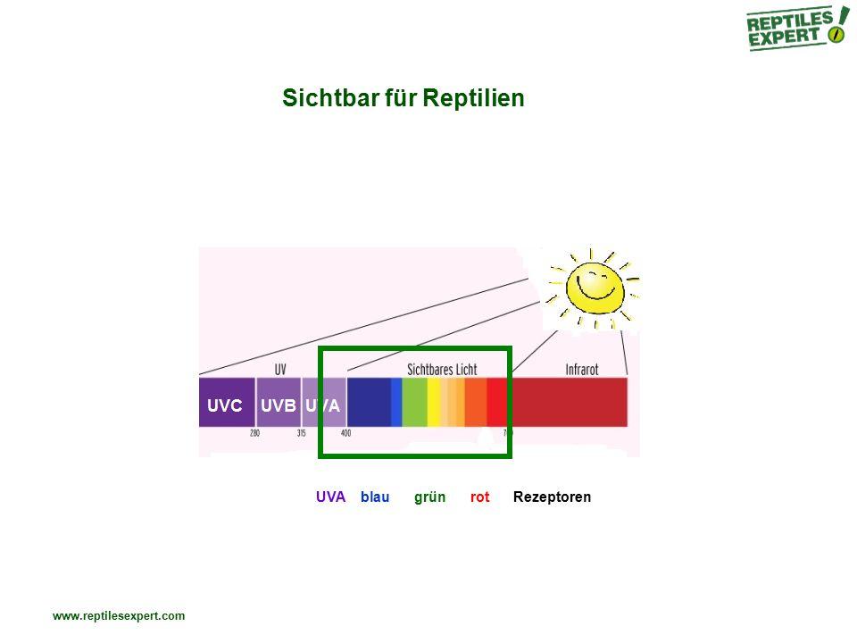 www.reptilesexpert.com Sichtbar für Reptilien UVA blau grün rot Rezeptoren