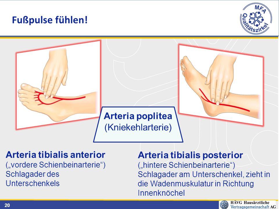 """20 Arteria tibialis posterior (""""hintere Schienbeinarterie"""") Schlagader am Unterschenkel, zieht in die Wadenmuskulatur in Richtung Innenknöchel Arteria"""