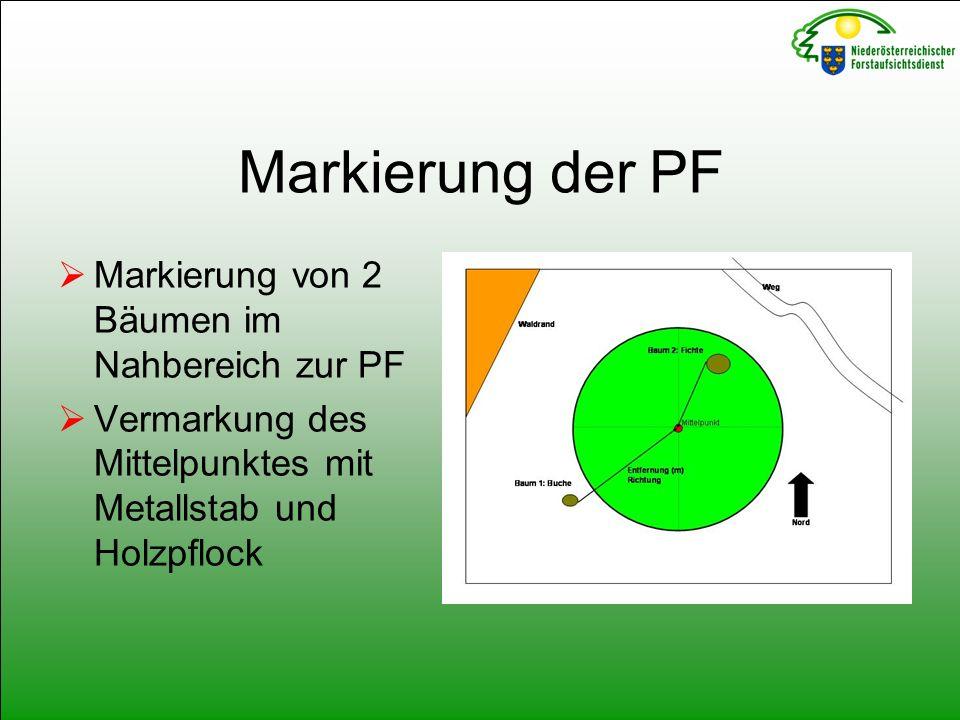 Markierung der PF  Markierung von 2 Bäumen im Nahbereich zur PF  Vermarkung des Mittelpunktes mit Metallstab und Holzpflock