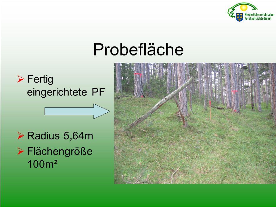 Probefläche  Fertig eingerichtete PF  Radius 5,64m  Flächengröße 100m²