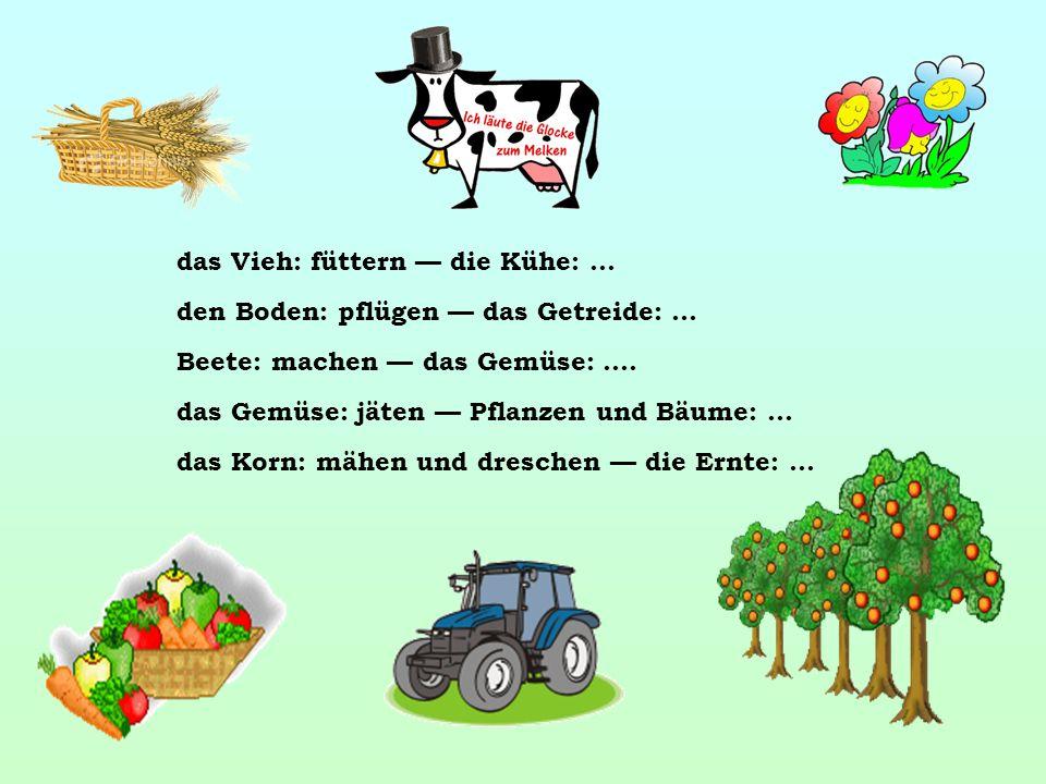 das Vieh: füttern — die Kühe: … den Boden: pflügen — das Getreide: … Beete: machen — das Gemüse: ….