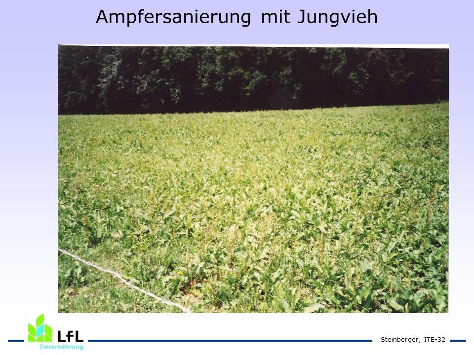 Steinberger, ITE-32 Ampfersanierung mit Jungvieh
