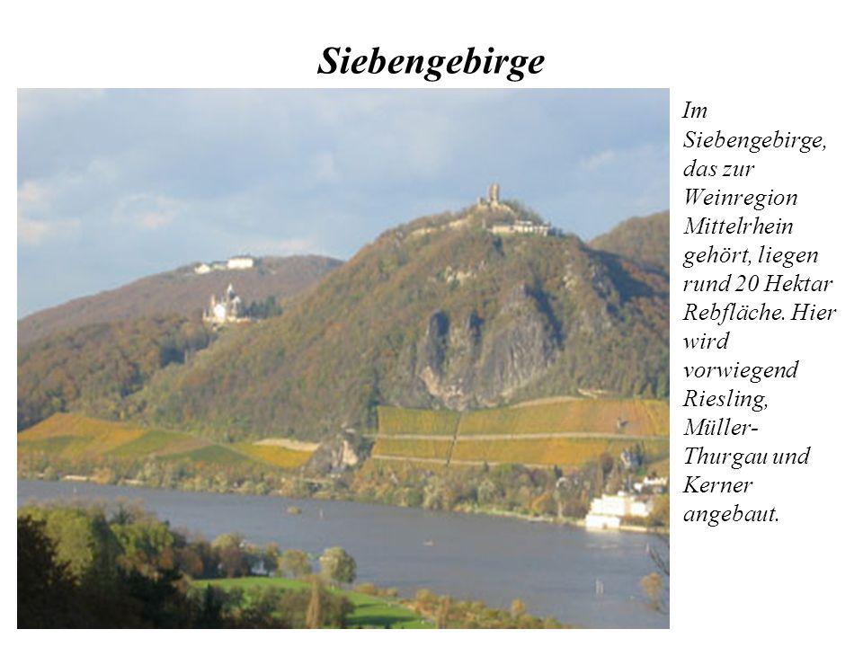 Siebengebirge Im Siebengebirge, das zur Weinregion Mittelrhein gehört, liegen rund 20 Hektar Rebfläche. Hier wird vorwiegend Riesling, Müller- Thurgau