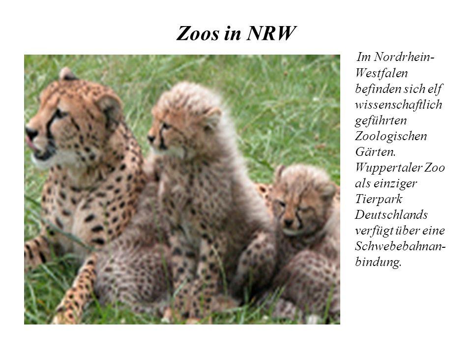 Zoos in NRW Im Nordrhein- Westfalen befinden sich elf wissenschaftlich geführten Zoologischen Gärten. Wuppertaler Zoo als einziger Tierpark Deutschlan