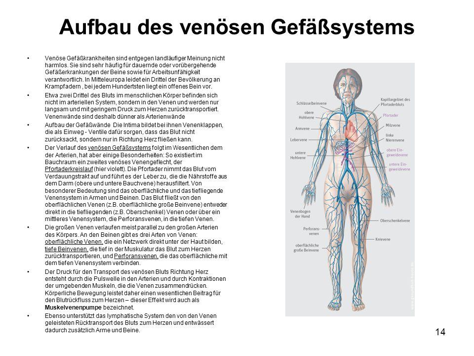 Aufbau des venösen Gefäßsystems Venöse Gefäßkrankheiten sind entgegen landläufiger Meinung nicht harmlos.