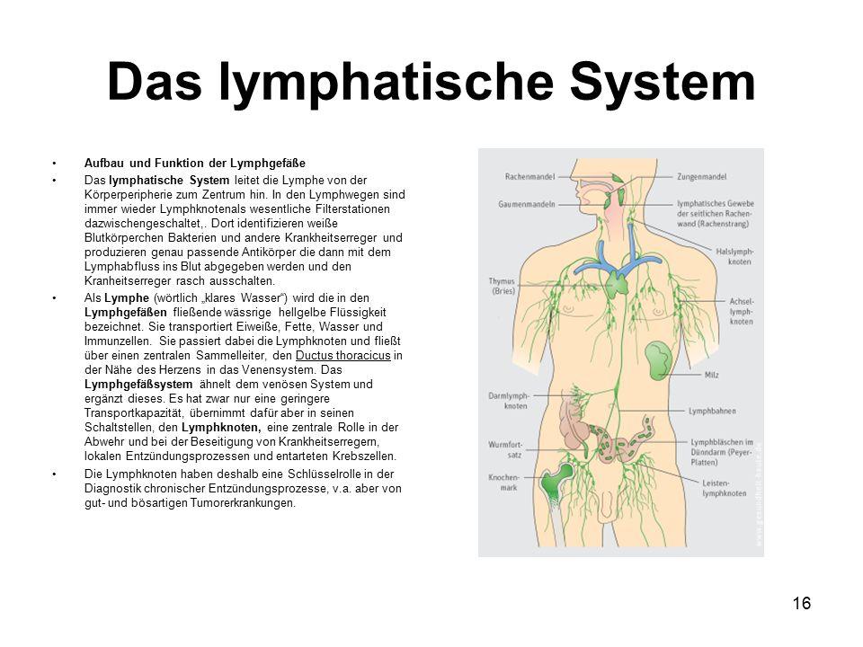 Das lymphatische System Aufbau und Funktion der Lymphgefäße Das lymphatische System leitet die Lymphe von der Körperperipherie zum Zentrum hin.