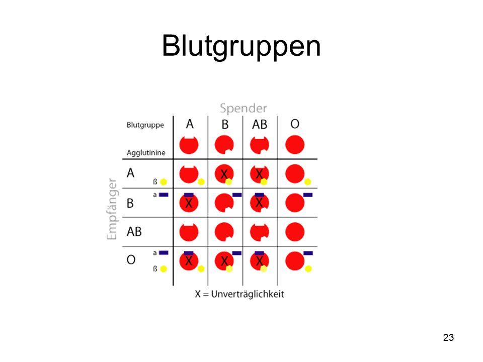 23 Blutgruppen