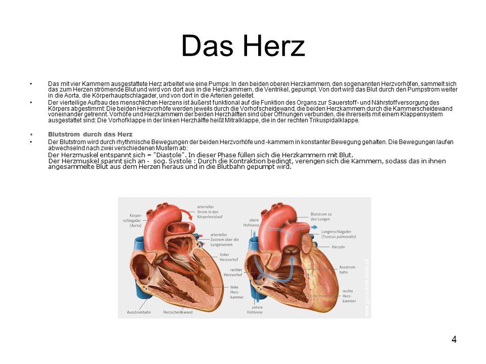 4 Das Herz Das mit vier Kammern ausgestattete Herz arbeitet wie eine Pumpe: In den beiden oberen Herzkammern, den sogenannten Herzvorhöfen, sammelt sich das zum Herzen strömende Blut und wird von dort aus in die Herzkammern, die Ventrikel, gepumpt.
