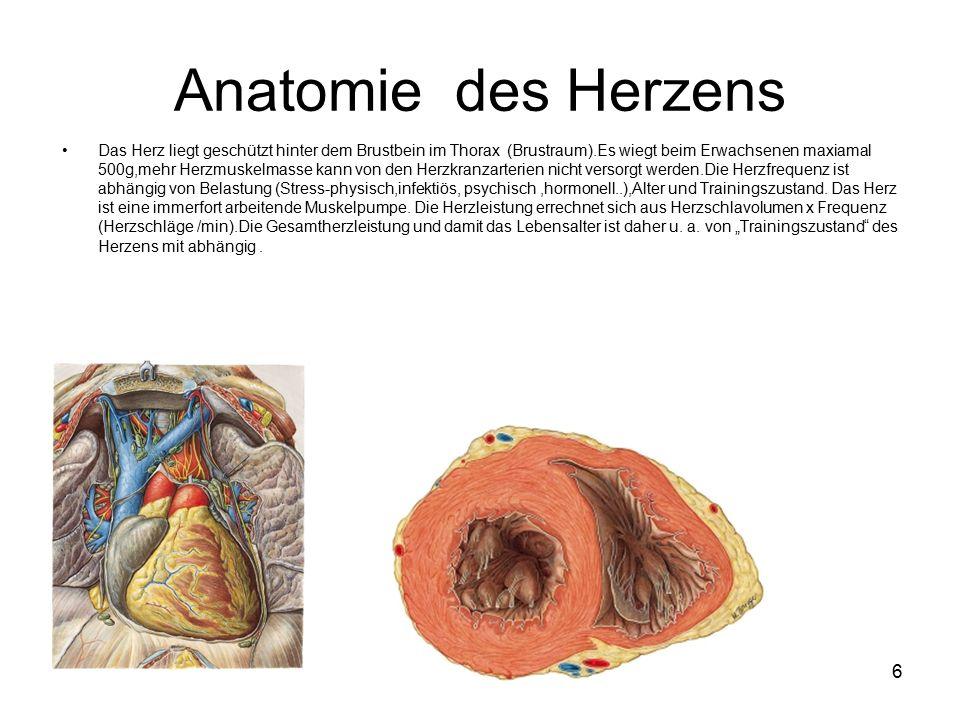 6 Anatomie des Herzens Das Herz liegt geschützt hinter dem Brustbein im Thorax (Brustraum).Es wiegt beim Erwachsenen maxiamal 500g,mehr Herzmuskelmasse kann von den Herzkranzarterien nicht versorgt werden.Die Herzfrequenz ist abhängig von Belastung (Stress-physisch,infektiös, psychisch,hormonell..),Alter und Trainingszustand.