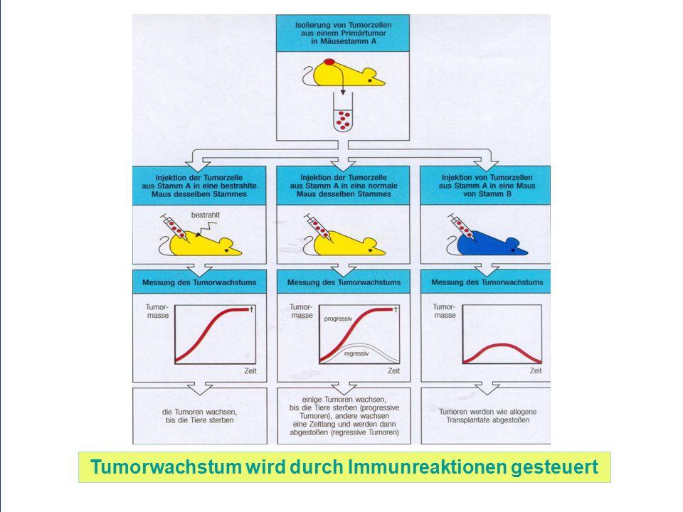 Tumorwachstum wird durch Immunreaktionen gesteuert