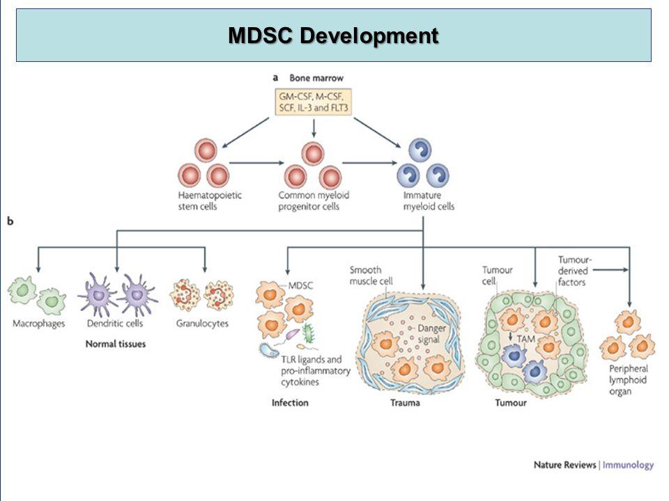 MDSC Development