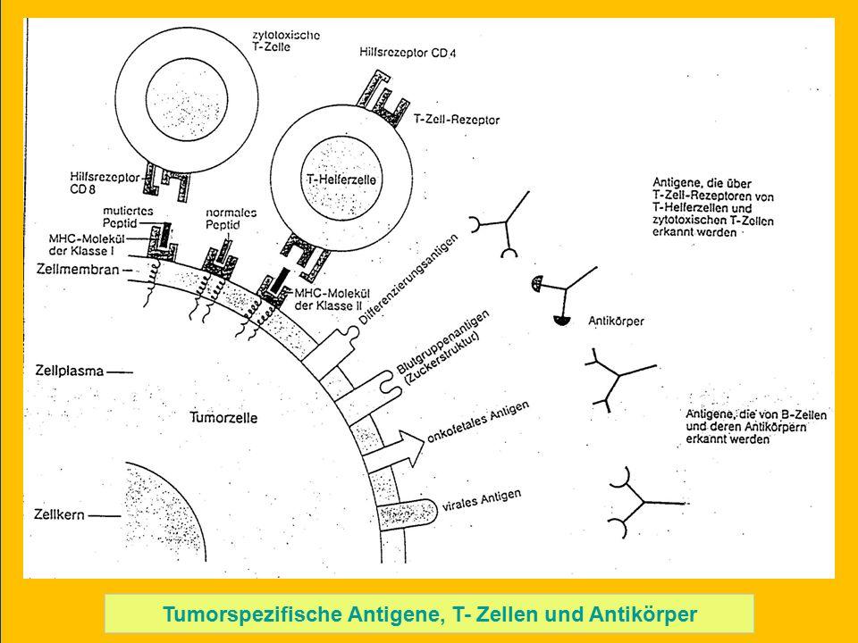 Tumorspezifische Antigene, T- Zellen und Antikörper