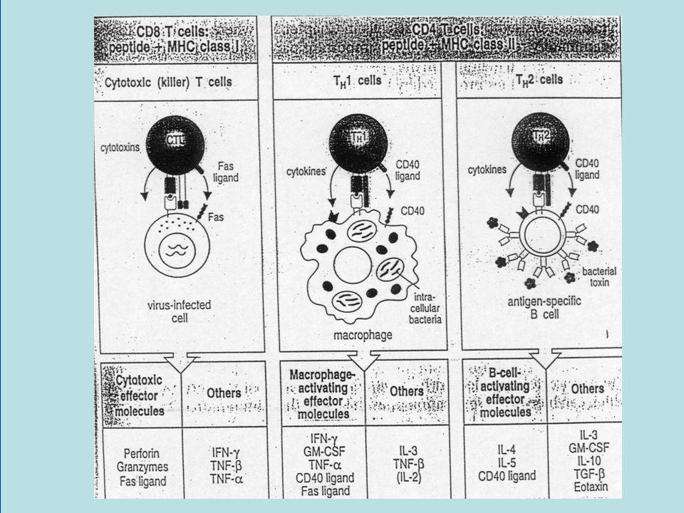 Treg-Mediated Immunosuppression