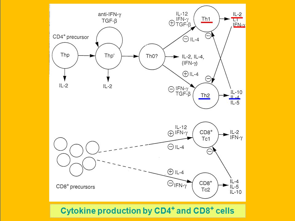 Cytokine production by CD4 + and CD8 + cells