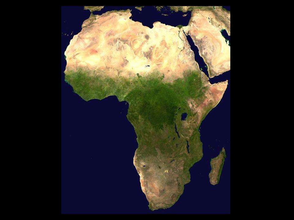 Afrika die Wiege der Menschheit