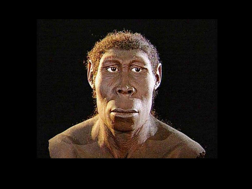 Die Kolonialisierung brachte der afrikanischen Bevölkerung Gewalt, Entmündigung, Demütigung und Entwurzelung.