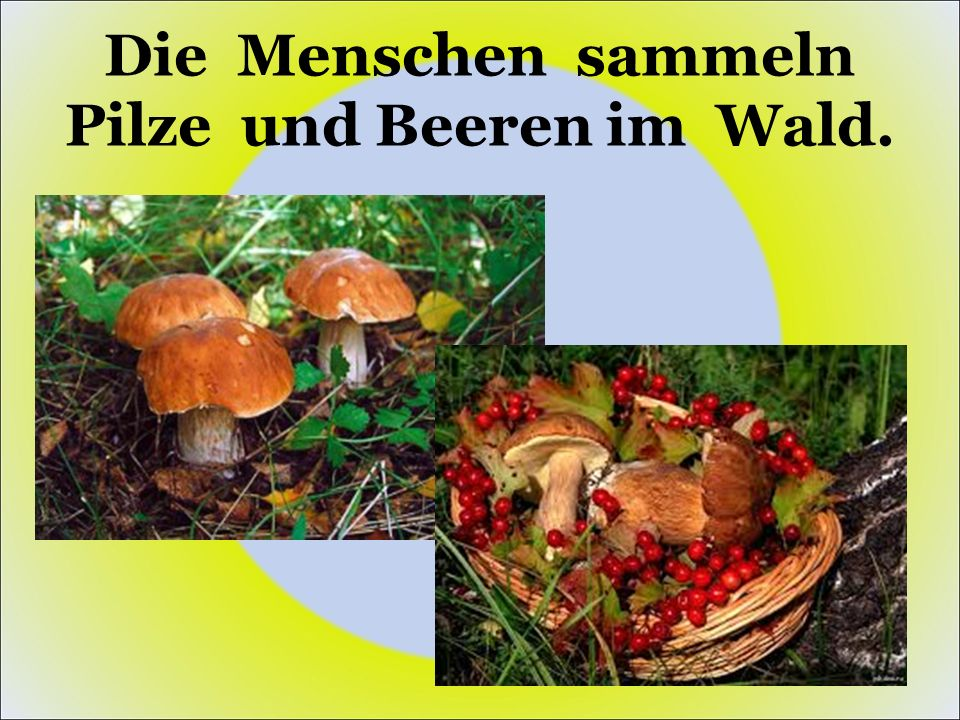 Die Menschen sammeln Pilze und Beeren im Wald.