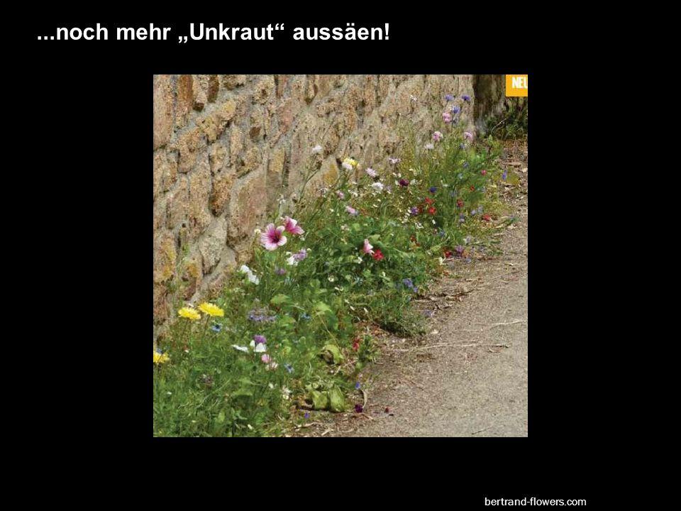 """...noch mehr """"Unkraut aussäen! bertrand-flowers.com"""