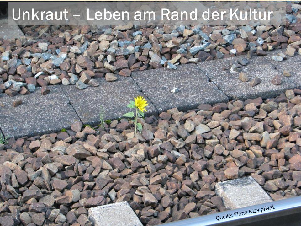 ...dem Freischneider mal frei geben! bertrand-flowers.com