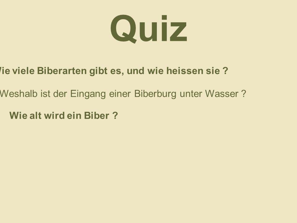Quiz Wie viele Biberarten gibt es, und wie heissen sie ? Weshalb ist der Eingang einer Biberburg unter Wasser ? Wie alt wird ein Biber ?