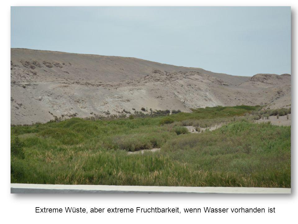 Extreme Wüste, aber extreme Fruchtbarkeit, wenn Wasser vorhanden ist