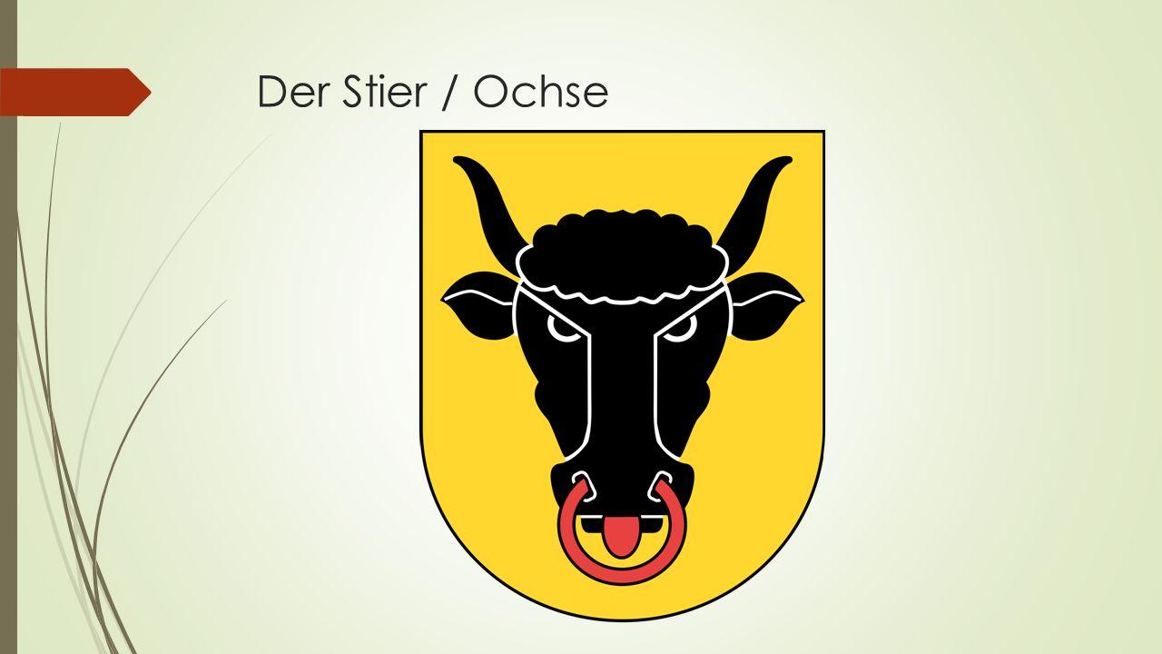 Der Stier / Ochse