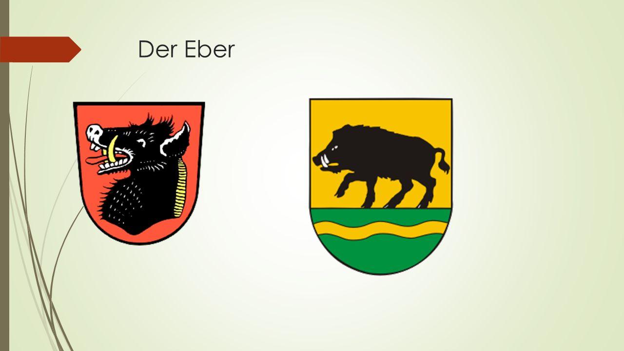 Der Eber