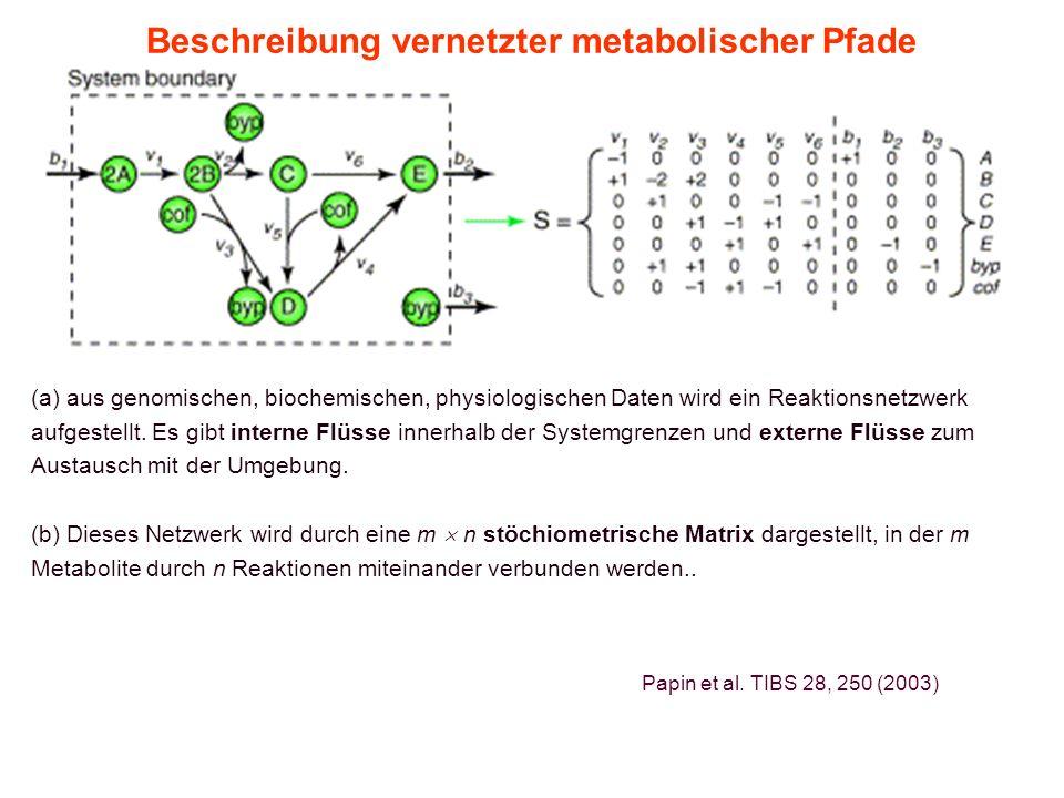 11. Vorlesung WS 2015/16Softwarewerkzeuge9 Beschreibung vernetzter metabolischer Pfade (a) aus genomischen, biochemischen, physiologischen Daten wird