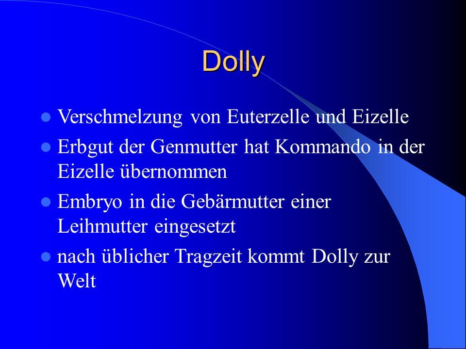 Dolly Verschmelzung von Euterzelle und Eizelle Erbgut der Genmutter hat Kommando in der Eizelle übernommen Embryo in die Gebärmutter einer Leihmutter