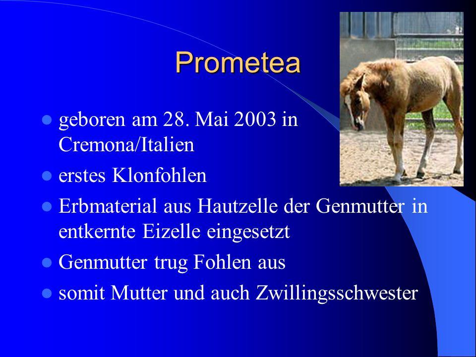 Prometea geboren am 28. Mai 2003 in Cremona/Italien erstes Klonfohlen Erbmaterial aus Hautzelle der Genmutter in entkernte Eizelle eingesetzt Genmutte