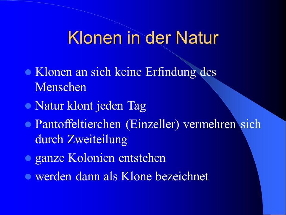 Klonen in der Natur Klonen an sich keine Erfindung des Menschen Natur klont jeden Tag Pantoffeltierchen (Einzeller) vermehren sich durch Zweiteilung g