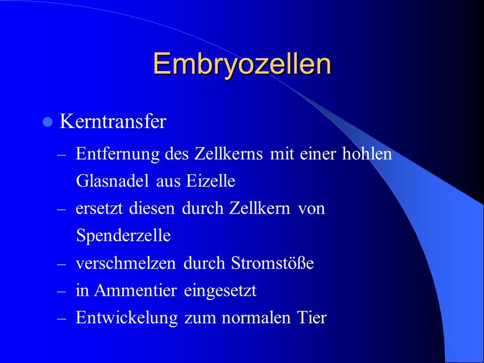 Embryozellen Kerntransfer – Entfernung des Zellkerns mit einer hohlen Glasnadel aus Eizelle – ersetzt diesen durch Zellkern von Spenderzelle – verschm