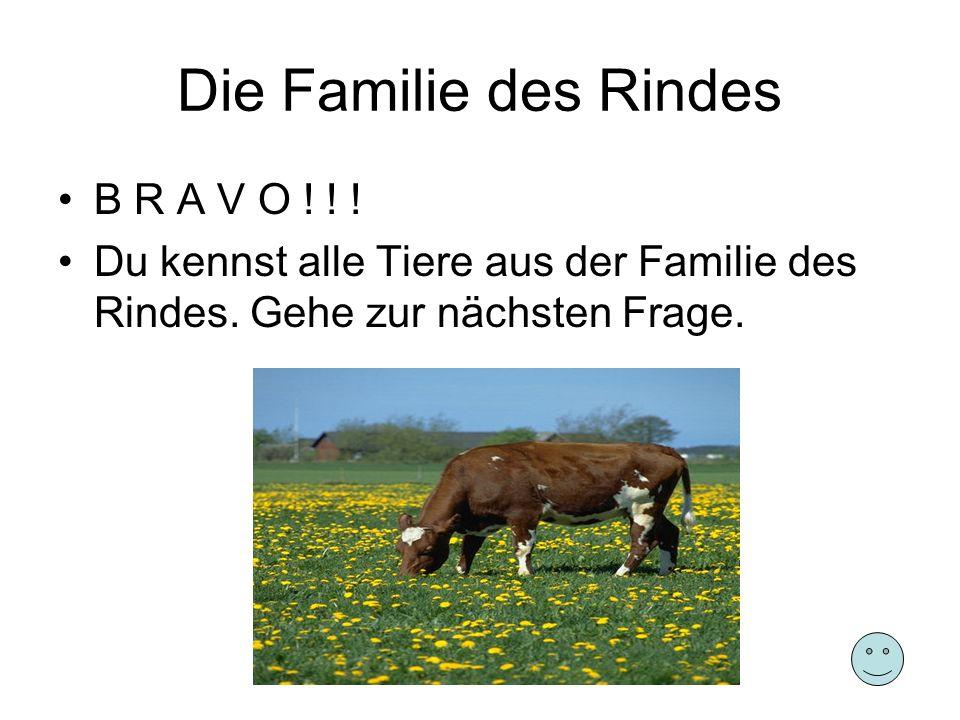 Die Familie des Rindes B R A V O ! ! ! Du kennst alle Tiere aus der Familie des Rindes. Gehe zur nächsten Frage.