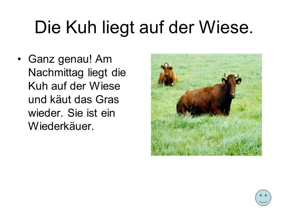 Die Kuh liegt auf der Wiese. Ganz genau! Am Nachmittag liegt die Kuh auf der Wiese und käut das Gras wieder. Sie ist ein Wiederkäuer.