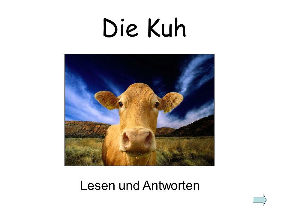 Die Kuh Lesen und Antworten