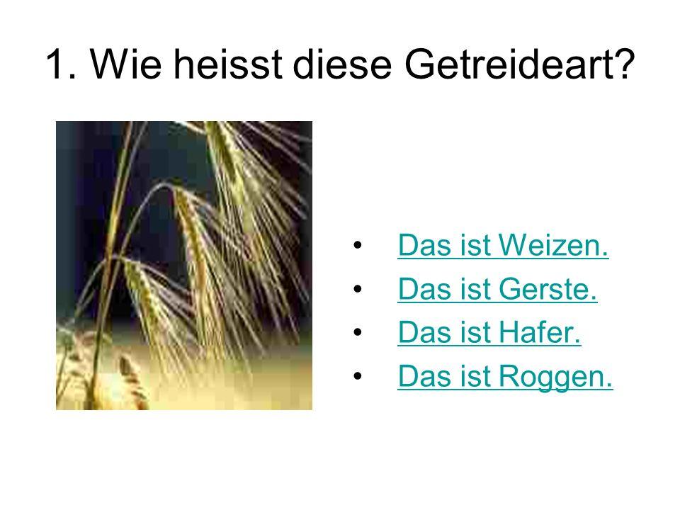 1. Wie heisst diese Getreideart? Das ist Weizen. Das ist Gerste. Das ist Hafer. Das ist Roggen.