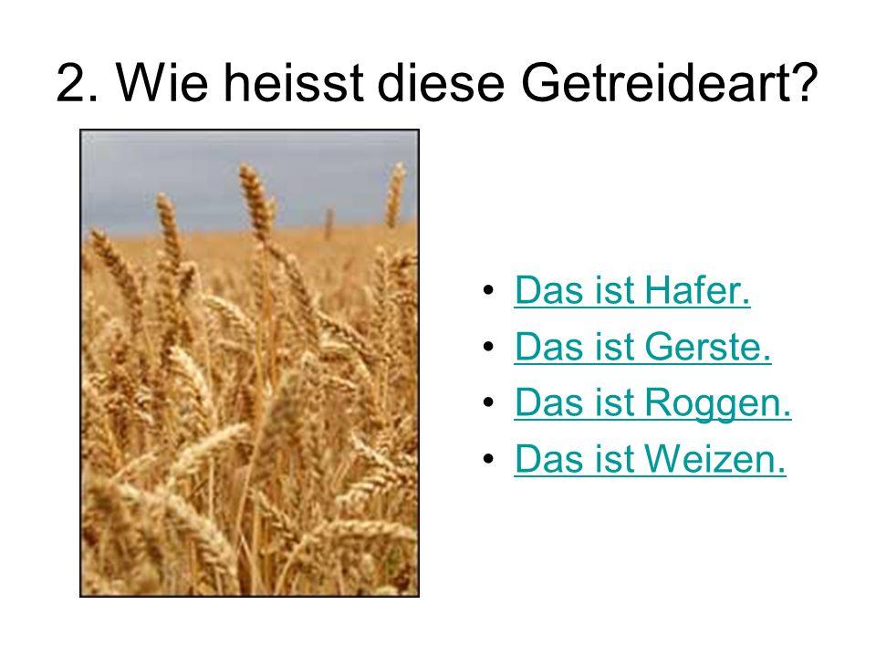 2. Wie heisst diese Getreideart? Das ist Hafer. Das ist Gerste. Das ist Roggen. Das ist Weizen.