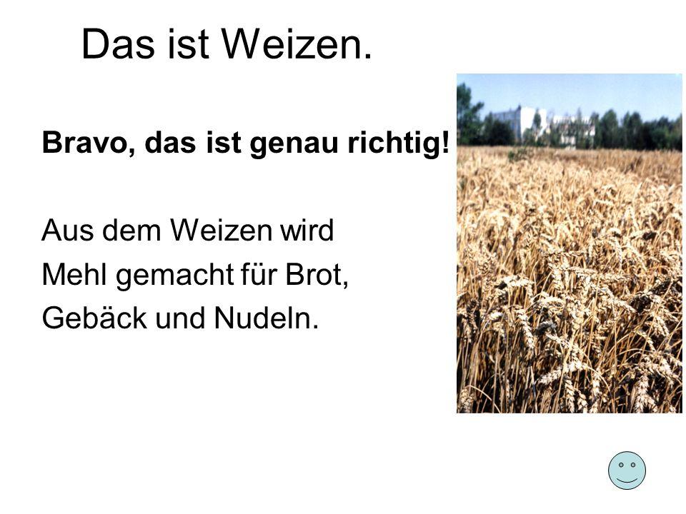 Bravo, das ist genau richtig! Aus dem Weizen wird Mehl gemacht für Brot, Gebäck und Nudeln.