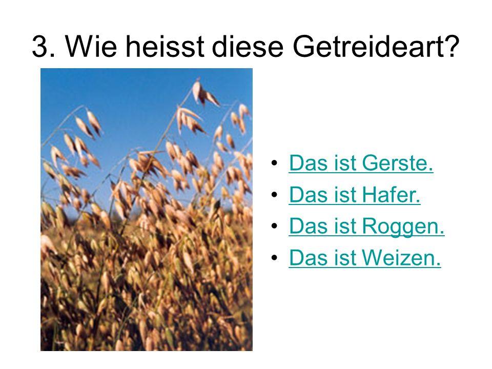 3. Wie heisst diese Getreideart? Das ist Gerste. Das ist Hafer. Das ist Roggen. Das ist Weizen.